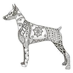 Doberman pinscher zentangle stylized, vector, illustration, free — Stock Illustration #107143410
