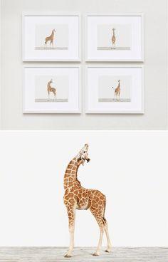 "everlytrue: "" Baby Giraffe Prints [by Sharon Montrose] """