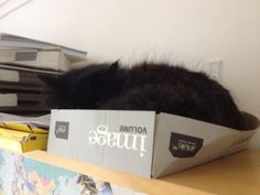 Millie in her favourite place in the Admissions office