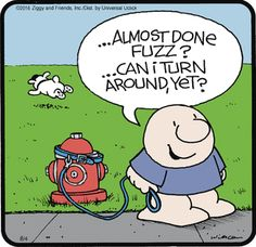 Ziggy Comic Strip, August 04, 2016     on GoComics.com