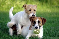 ¿Existe la homosexualidad en perros?