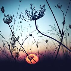 Silhouette Flower Canvas Print / Canvas Art by Luis Mariano González Pretty Pictures, Cool Photos, Cool Pictures For Wallpaper, Beautiful World, Beautiful Places, Beautiful Sunset, Simply Beautiful, Beautiful Photos Of Nature, Luis Mariano