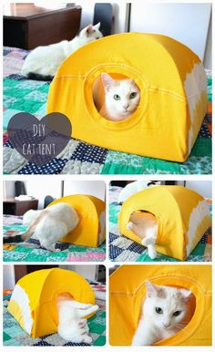 DIY Cat Tent from a T-Shirt and a Wire Hanger