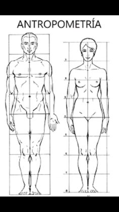 Human Figure Drawing Reference Billedresultat for antropometría Head Anatomy, Human Anatomy Drawing, Body Anatomy, Body Drawing, Human Figure Drawing, Figure Drawing Reference, Anatomy Reference, A Level Art Sketchbook, Anatomy Sketches