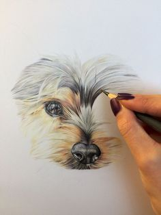 Pencil Art Gemma Duffield - Latest from Artist Studio Pencil Art Drawings, Realistic Drawings, Animal Drawings, Colored Pencil Techniques, Coloured Pencils, Color Pencil Art, Beautiful Drawings, Dog Portraits, Animal Paintings