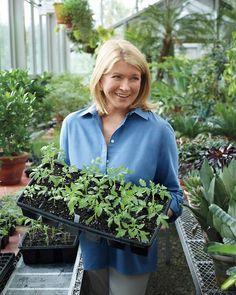 Gardening, Year-Round - Martha Stewart Home & Garden Garden Yard Ideas, Garden Projects, Garden Sheds, Spring Garden, Home And Garden, Martha Stewart Home, Winter Crops, Unique Gardens, The Great Outdoors
