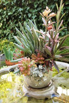 design/photo: Cindy Davison of The Succulent Perch