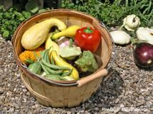 Basket of Home Grown Vegetables - Photo: © Marie Iannotti