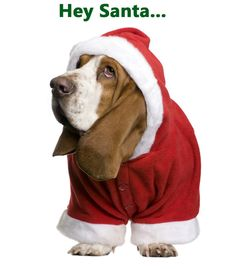 Basset Hound Christmas Card by houndieslove on Etsy
