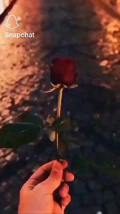 Love Song Lyrics Quotes, Snapchat, Dandelion, Plants, Angel, Dandelions, Plant, Taraxacum Officinale, Planets