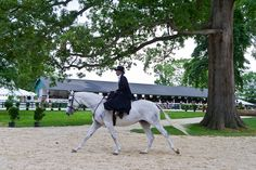 Sidesaddle someday. I really want to try (and then ride at Upperville!)