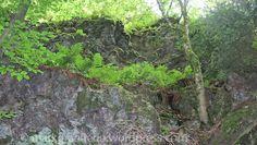 Wanderung mit Geologie und Bergbaugeschichte – Badenweiler