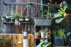 9 Essential Gardening Tips For Beginners