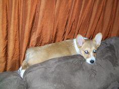 I comfy........