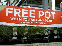 Why buy the plant?