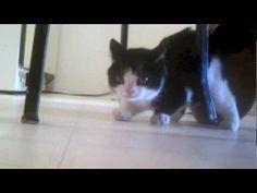 Meet Pokey - Grumpy Cats Brother #Pokey #Video Published on Oct 3, 2012