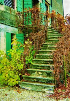 Autumnal stairs.