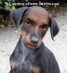 dog funny - Buscar con Google