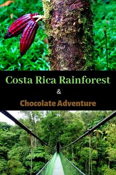 Costa Rica Rainforest and Chocolate Adventure. A not to be missed tour from San Jose into the jungles of Costa Rica complete with up close wildlife encounters and a demonstration of chocolate making… Chocolate Making, How To Make Chocolate, Travel Usa, Travel Tips, Travel Articles, Time Travel, Travel Guides, Jungles, Best Places To Travel