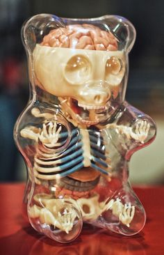 gummy bear toy internal skeleton organs transparant