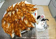 兄弟のように育つ猫のザクロと1歳のタイくん=杜本理絵さん撮影(翔泳社提供)