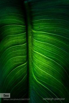 Blue-blooded - Pinned by Mak Khalaf Abstract abstractcolorgreenleafleaveslightnaturalnatureplantshadowsspringsummerveinveinsvignette by AshleighPienaar