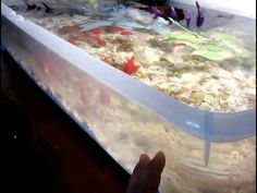I need to have one of these. Indoor fancy goldfish pond aquarium - YouTube
