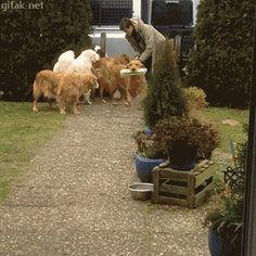 GIF chiens font les courses