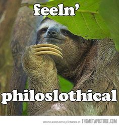 Funny pictures about Philosophy sloth. Oh, and cool pics about Philosophy sloth. Also, Philosophy sloth photos. Baby Sloth, Cute Sloth, Smiling Sloth, Baby Otters, Funny Cats, Funny Animals, Cute Animals, Funny Sloth, Sloth Cartoon