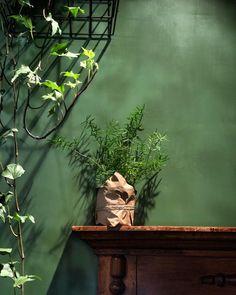 Растения в интерьере. Плющ в интерьере. Aquarium, Painting, Art, Craft Art, Paintings, Kunst, Gcse Art, Aquarius, Draw