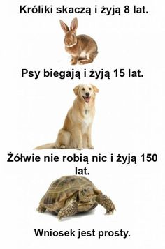 Nic nie rób, a żyć będziesz. Funny Animal Pictures, Funny Photos, Funny Animals, Cute Animals, Wtf Funny, Funny Facts, Funny Cute, Memes Humor, Polish Memes