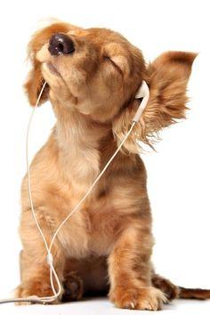 Doggy music!