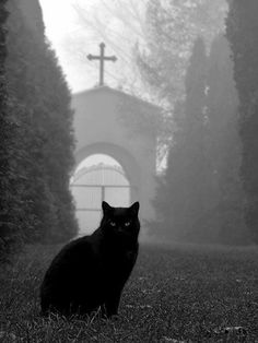 Black cat at the divided path