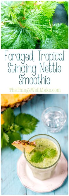 Don't let its sting scare you away, the stinging nettle packs a powerful nutritional punch, and is a great addition to smoothies like this foraged, tropical stinging nettle smoothie.