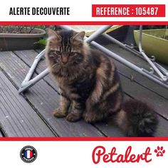 19.03.2017 / Chat / Plaisir / Yvelines / France