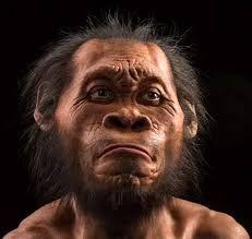 HOMO NALEDI:Homo naledi (del latín homo, «hombre», y del sesotho naledi, «estrella») es una especie de homínino extinto del género Homo que vivió en lo que ahora es Sudáfrica.