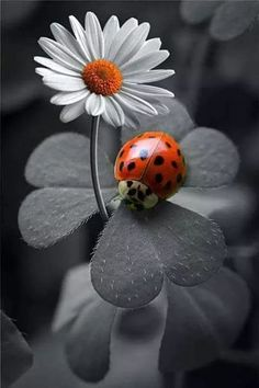 Ideas For Black And White Nature Photography Color Splash Lady Bug Nature Photography Flowers, Animal Photography, Landscape Photography, Photography Ideas, Color Photography, Photography Accessories, Photography Lighting, Flowers Nature, Photography Backdrops