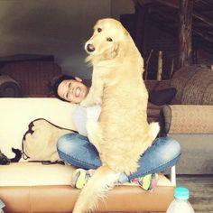 big-dog-12