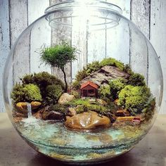 Home DECOR mini terrarium/waterfall Mini Terrarium, Miniature Terrarium, Terrarium Scene, Terrarium Plants, Glass Terrarium, Succulent Terrarium, Miniature Fairy Gardens, Fairy Terrarium, Terrarium Wedding