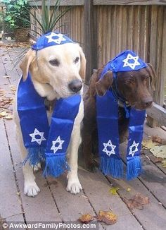 Well, that was awkward! The hilarious photos of owners who love their pets. Power Of Your Love, Shabbat Shalom Images, Funny Animals, Animal Funnies, Days Of Creation, Dog Wear, Sea Fish, Love Pet, Funny Photos