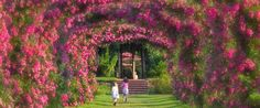 At the center of Elizabeth Park in Hartford is the third largest rose garden in the United States. acres of these gorgeous flowers show their colors each season. Beach Hotels, Beach Resorts, Roses Only, Beach Trip, Hawaii Beach, Oahu Hawaii, Beach Travel, Parts Unknown, New England Travel