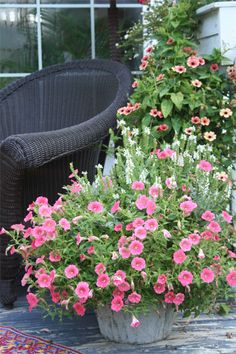Container garden arrangements     mixing up different plants in containers,  arrangement of tiny petunias, salvia and dusty miller