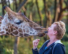 A Wild Kiss Giraffe, Kiss, Spaces, Animals, Felt Giraffe, Animales, Animaux, Giraffes, Animal