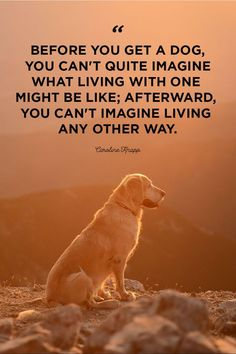 30 cute dog love quotes - puppy sayings and dog best friend quotes Puppy Quotes, Motivacional Quotes, Animal Quotes, Labrador Quotes, Loyalty Quotes, Wife Quotes, Dog Best Friend Quotes, Dog Quotes Love, Quotes About Dogs