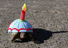 This listing is a pre-order for a custom Birthday tortoise cozy, crocheted from my own pattern from acrylic yarn. The pictures above show a few