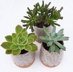 Succulent Planter - Rustic Planter - Pottery Planter - Stoneware Planter - Speckled Planter 38.46.  ships from Australia