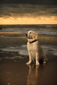 I want a dog and take it to the beach!