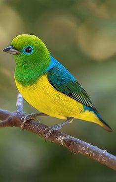 Pretty Birds, Beautiful Birds, Animals Beautiful, Cute Animals, Rare Birds, Exotic Birds, Colorful Birds, Bird Pictures, Little Birds