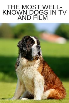 The Most Well-Known Dogs in TV and Film   Life in a Break Down