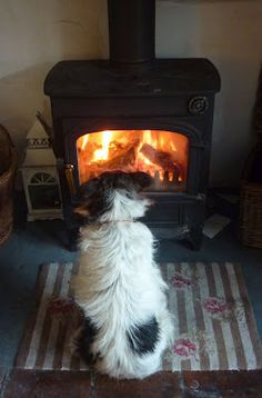 Toasty... dog has the right idea... can't wait to go home and see my fire place...